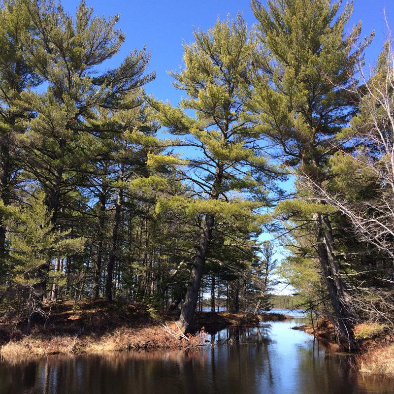 Torch Lake Township